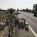 nomads on the move state highway 31 madhya pradesh